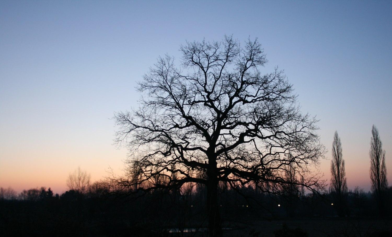 un-arbre-en-hiver
