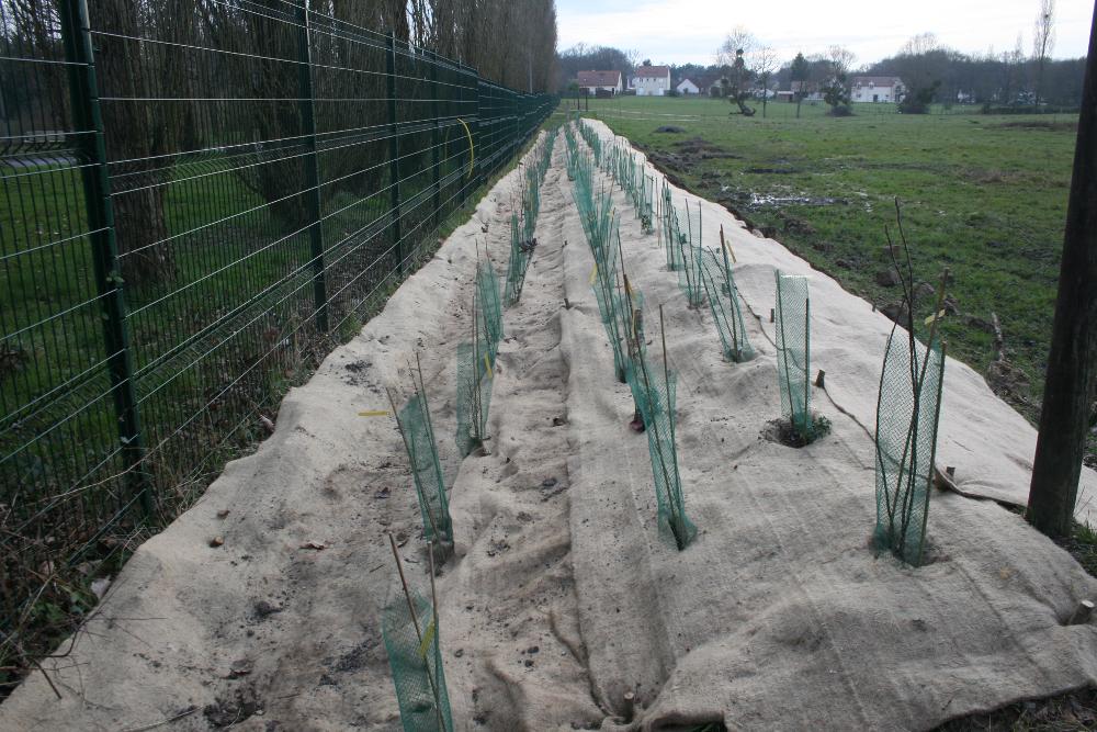 al-terre-ferme-2013-03-chantier_haie2-resultat-2