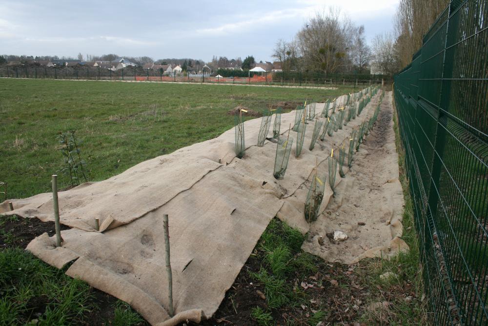 al-terre-ferme-2013-03-chantier_haie2-resultat-3
