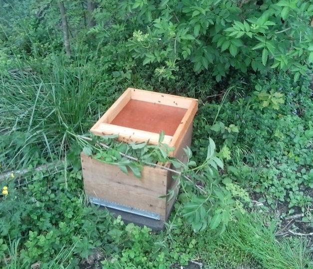 Après 5 bonnes minutes, elles ont quasiment toutes pénétré dans la ruche