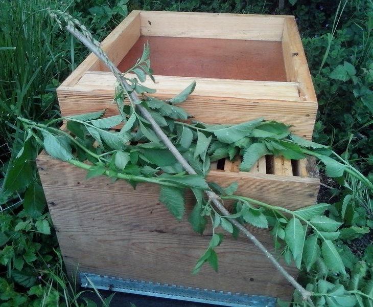 A part une ou deux, elles sont toutes rentrées, je peux alors retirer les branches et refermer la ruche