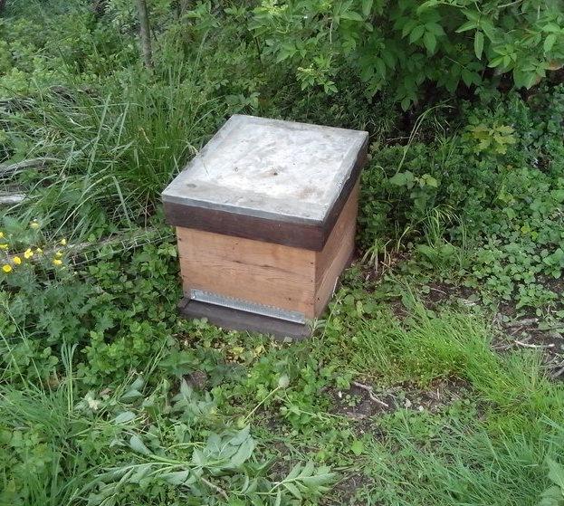 Les abeilles sont rentrées, la ruche est refermée. L'opération a duré un peu de temps et le la température ambiante a diminué les abeilles sont donc bien à l'intérieur