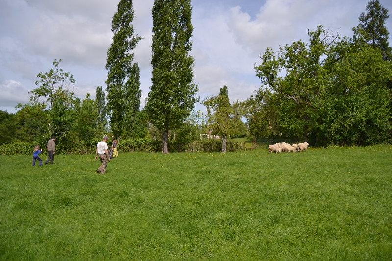 L'occasion d'une petite balade dans les prés à pousser devant nous les moutons