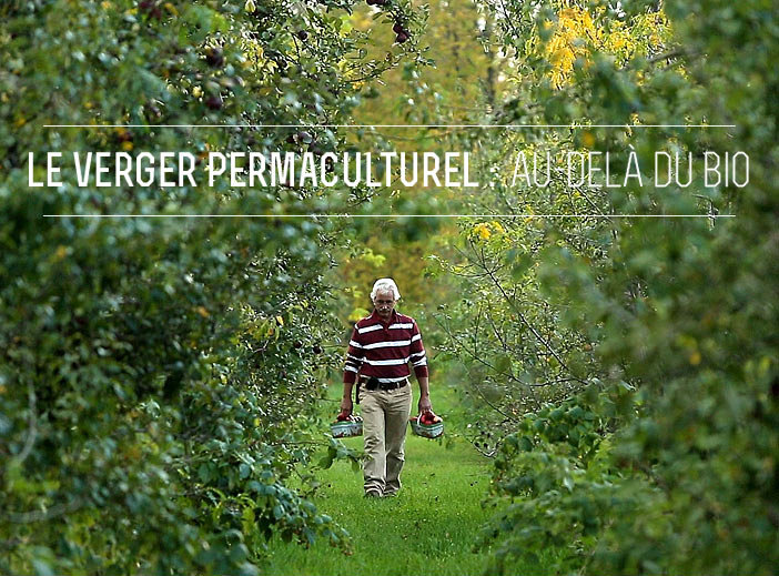 Permaculture orchard
